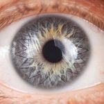 Глазной банк «АЙЛАБ», помимо производства медицинского изделия «Материал для восстановления роговицы», уделяет большое внимание обучению офтальмохирургов методикам проведения различных видов операций кератопластики.